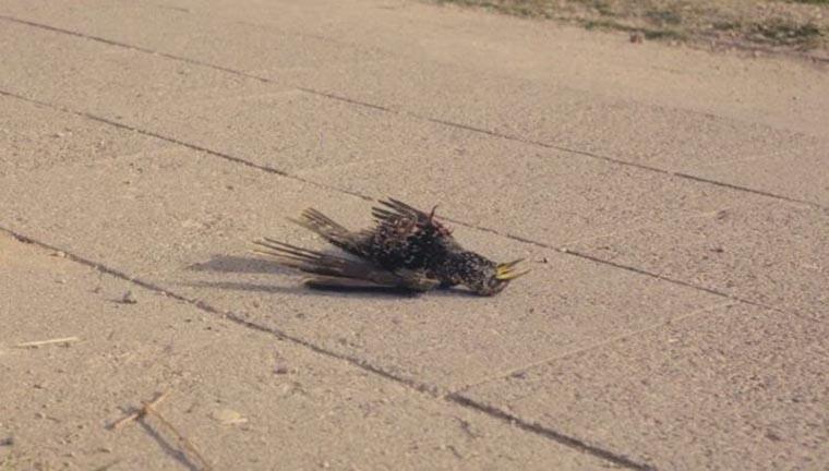 Мертвая птица в Припяти