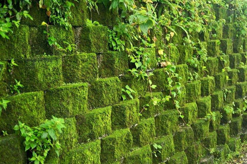 Вертикальное озеленение-мох
