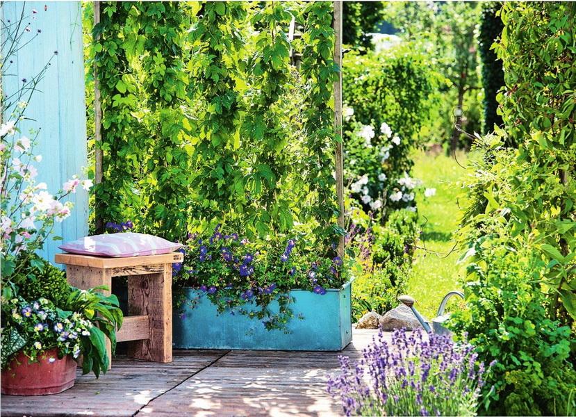 Вертикальное озеленение-живая ширма в саду