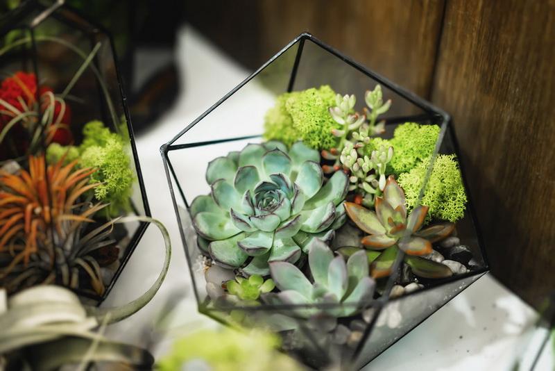 Флорариум- композиция из живых растений