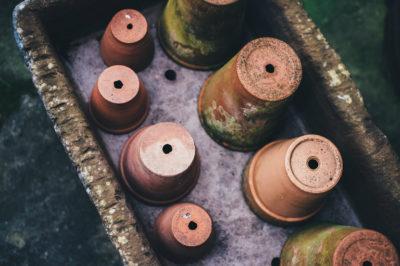 Як посадити ананас: Вибираємо горщик
