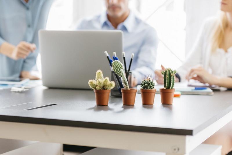 Кактус-хит офисных интерьеров