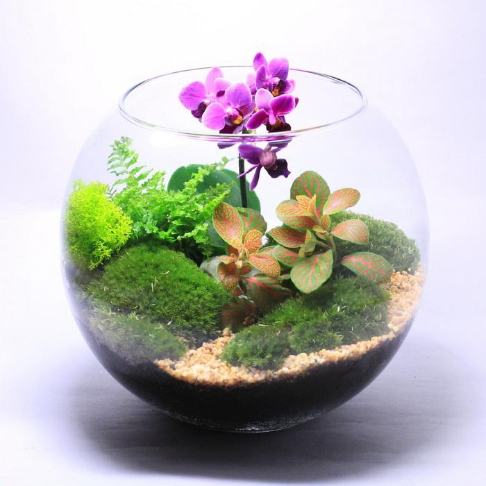 Красочный флорариум-с орхидеей