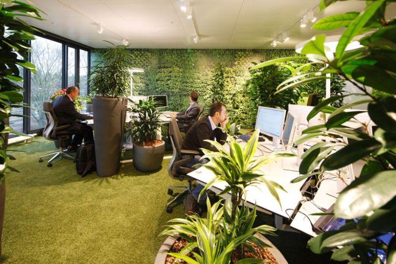 Озеленение офиса-комфорт и уют
