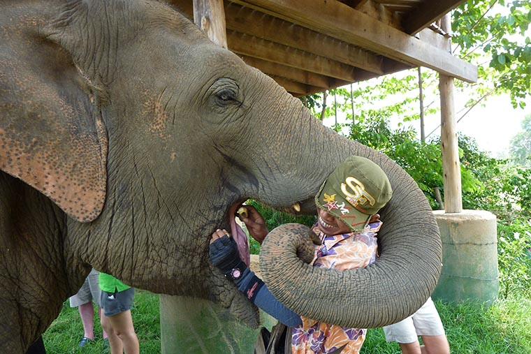 Слон и махаут