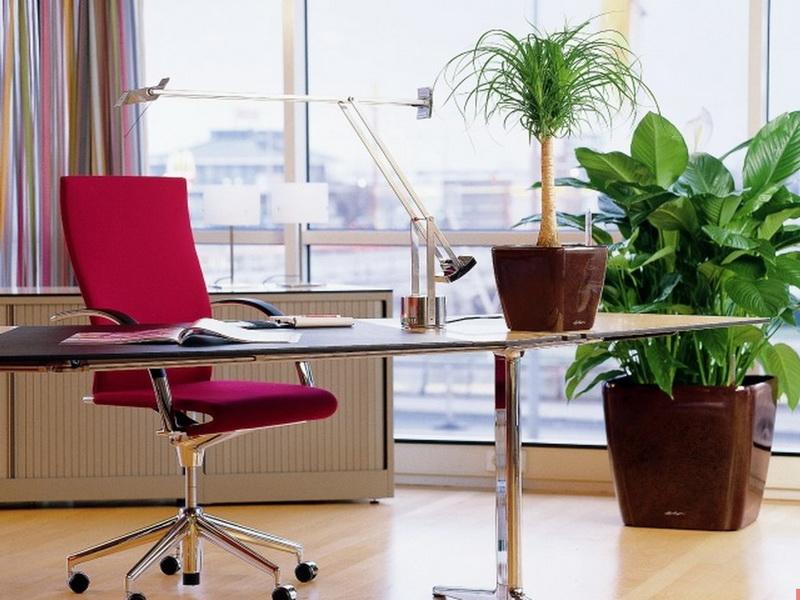 Зеленый оазис-в офисе