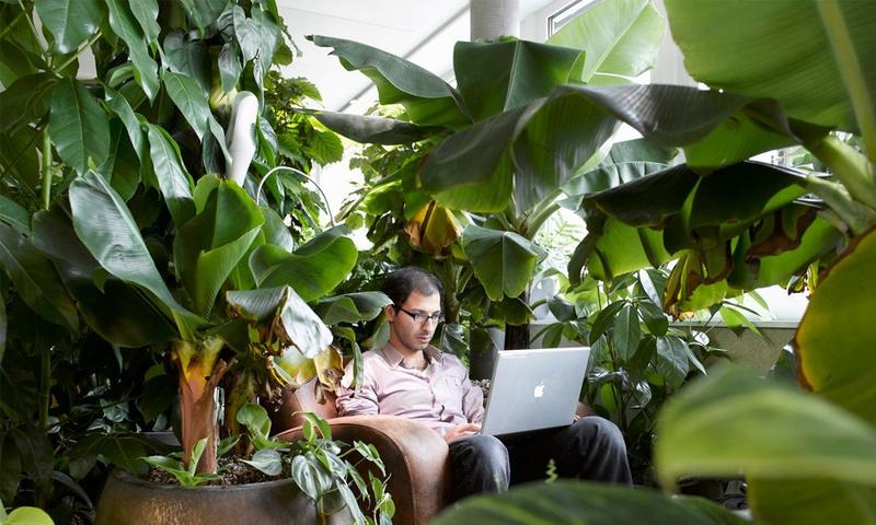 Зеленый офис-комфорт-будни