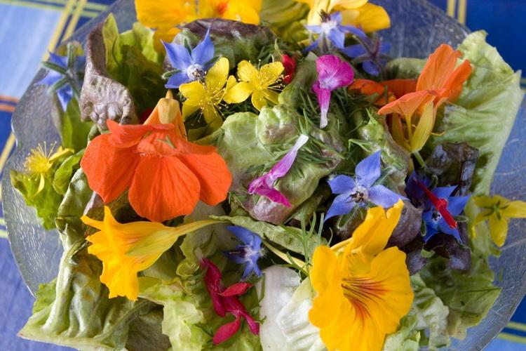 Настурция-салат из цветов