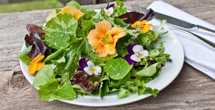 Съедобные цветы-французский огород