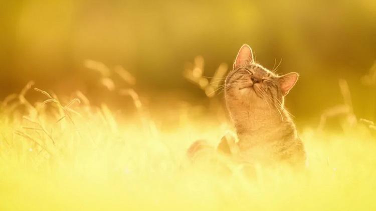 Бархатный сезон-довольный кот