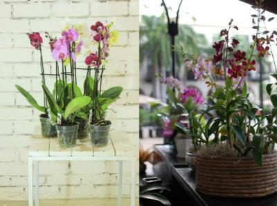 В який горщик пересадити орхідею