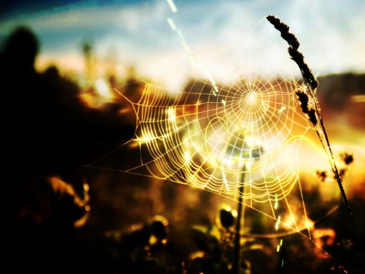 Паутинки лета-фото