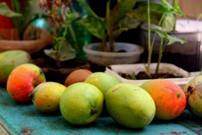 как посадить манго