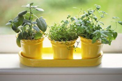 Вирощуємо зелень на кухні