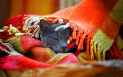 Кішка в пледі