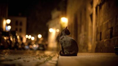 Кіт на дорозі ввечері