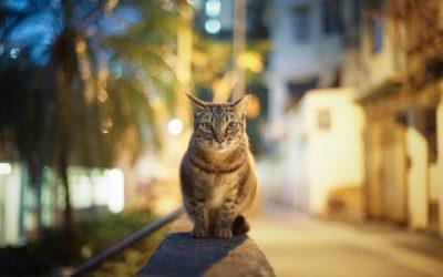 Фото кішки в денний час