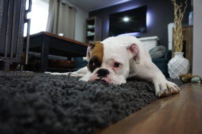 чищення килимів