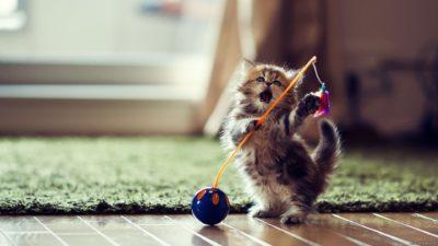 как сделать игрушки для котят