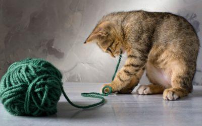 іграшка для кішки своїми руками