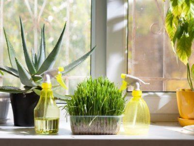 сухой воздух в квартире симптомы