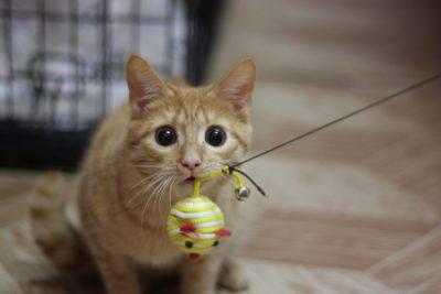 - як зробити іграшку для кота в домашніх умовах