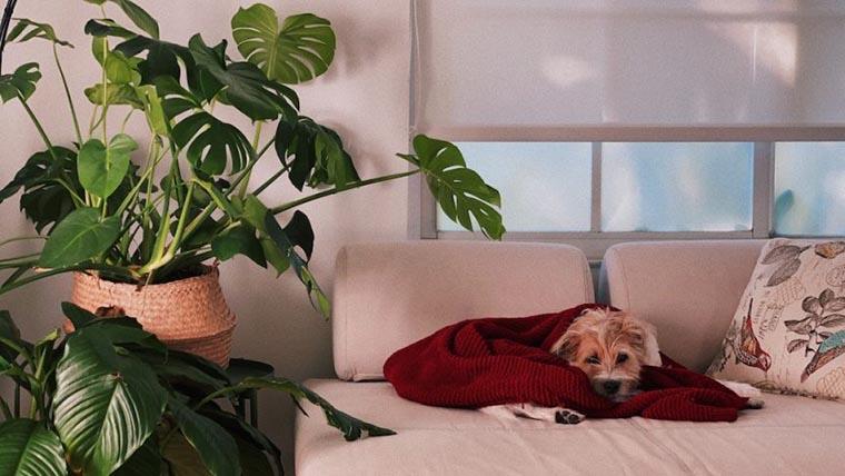 Питомец на диване