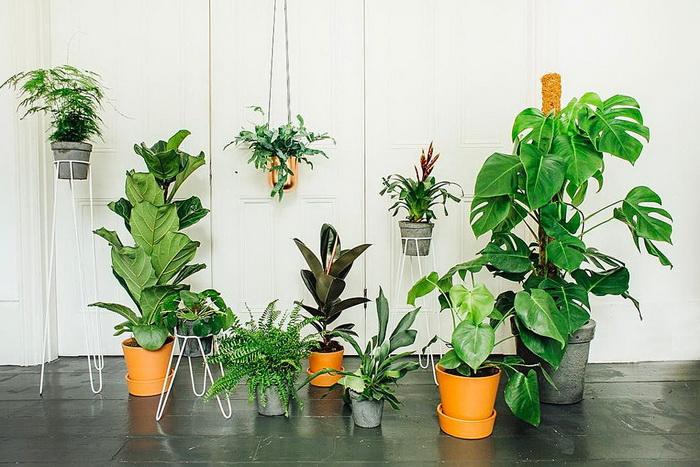 Растения-хлорофилл