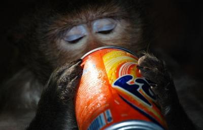 Знімок мавпочки з фантою