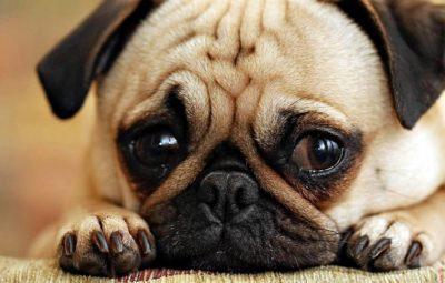 Знімок собаки