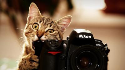 Кіт з фотокамерою
