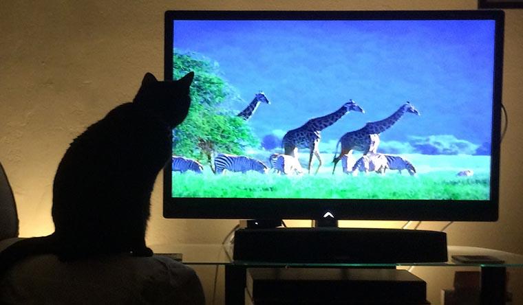 Котик смотрит ТВ