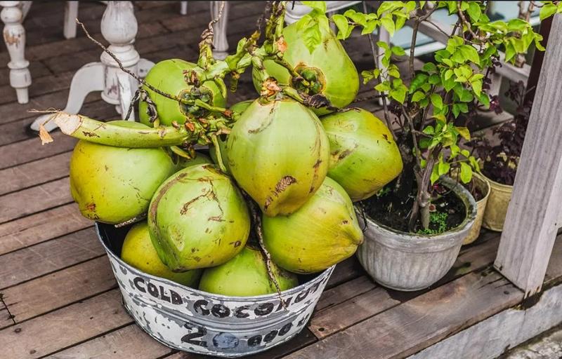Молодые кокосы-зеленые