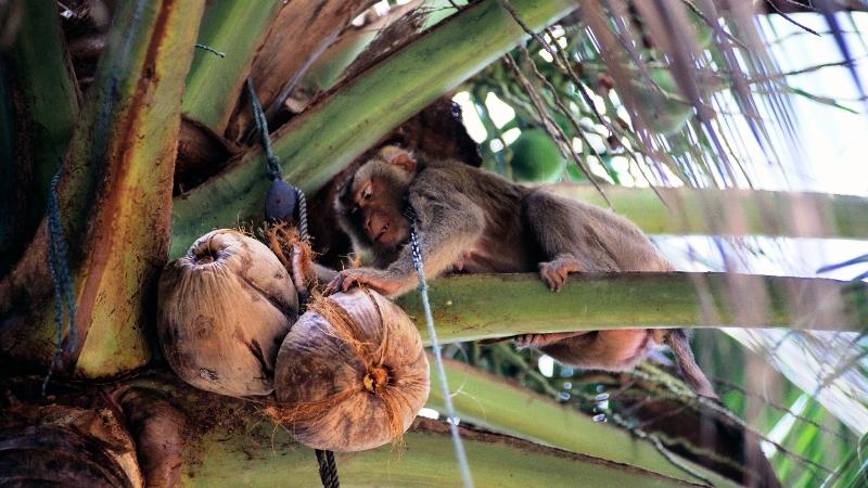 Школа обезьян-фото