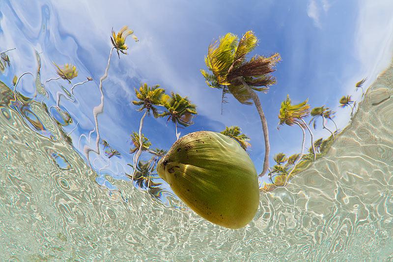coconut-ocean
