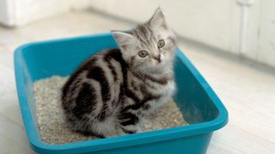 як привчити кота до горщика