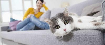 чищення дивана
