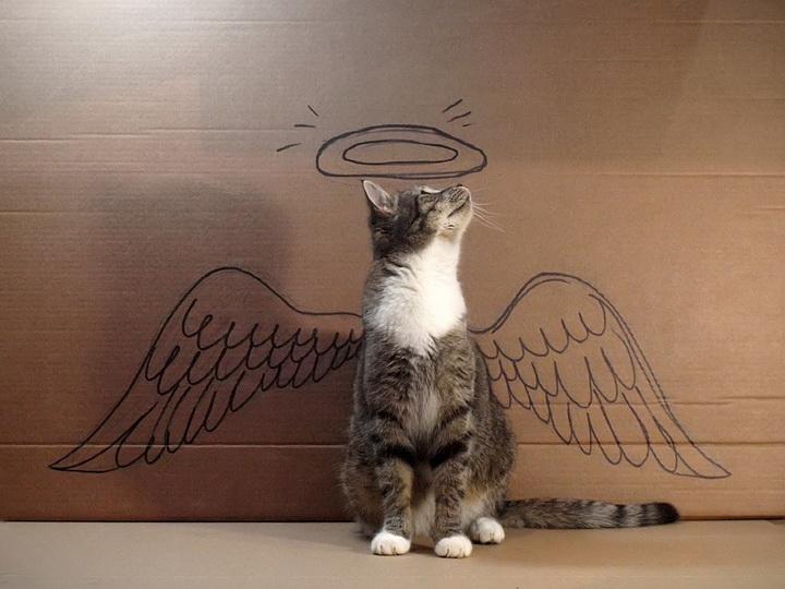 Котенок-фото