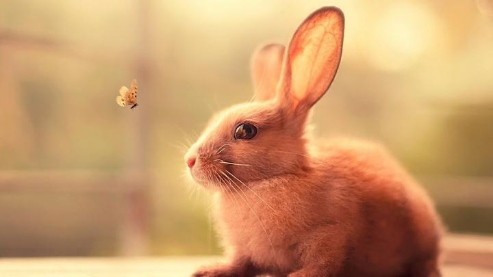Кролик-животные