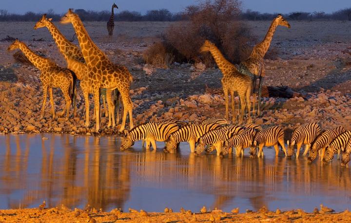 Водопой-Африка