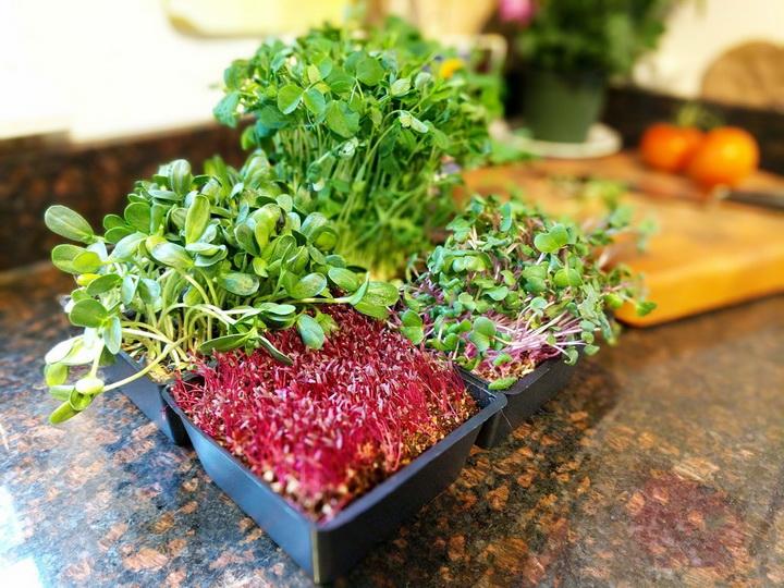 Выращиваем микрогрин-витамины круглый год