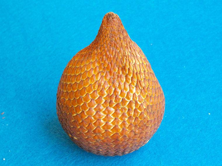Зміїний фрукт