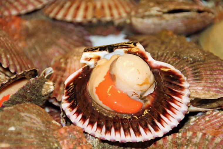 Сырой морской гребешок