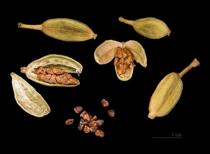 Коробочки кардамона-семена