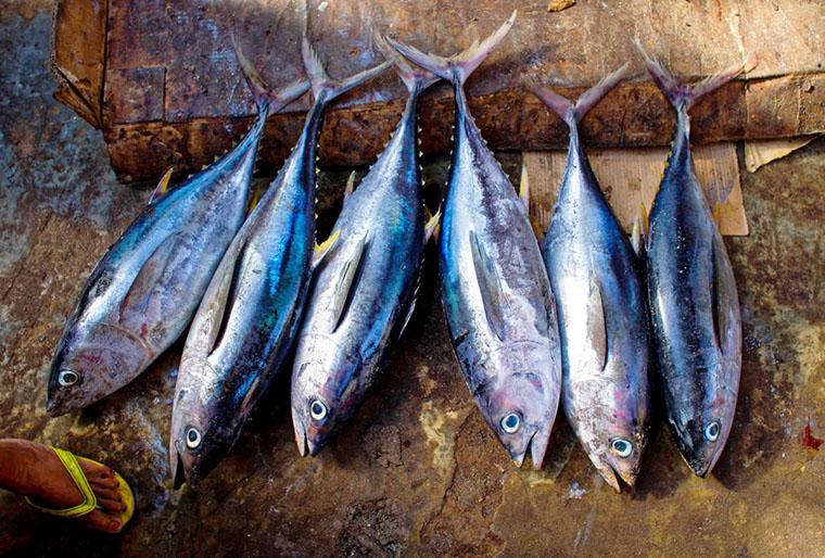 Сырой тунец