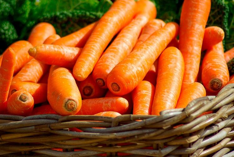 Оранжевая морковь-урожай
