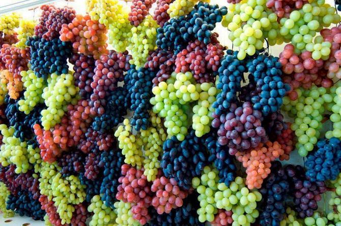 Урожай-виноград