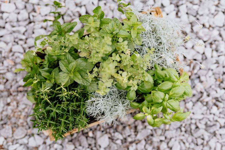 Полезные травы-в кулинарии