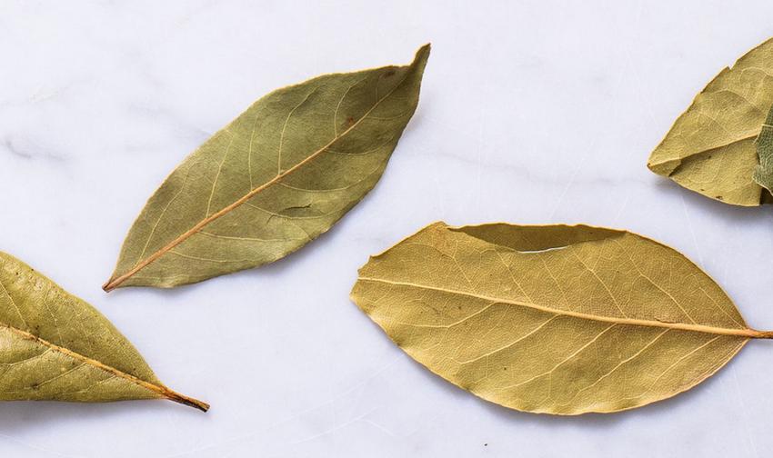 Лавровый лист-специи и пряности