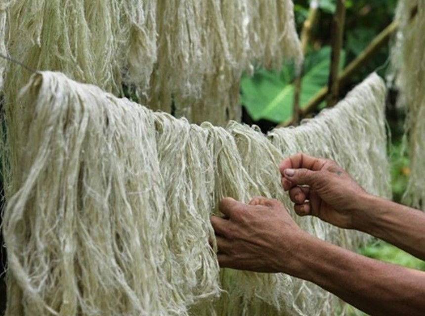Производство ананасовой кожи
